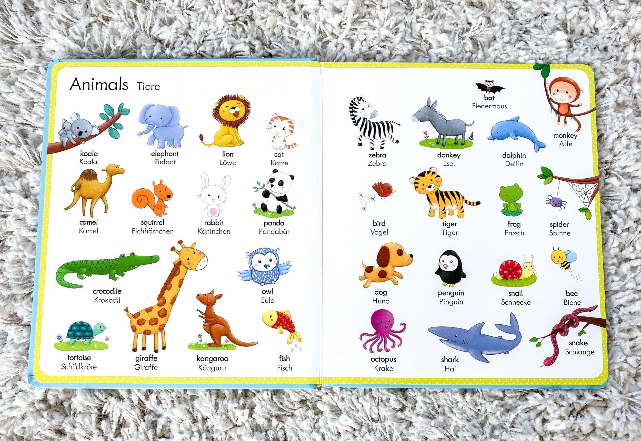 Mein erstes Wörterbuch Englisch - Deutsch_2